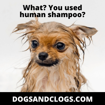 Dos and Dont's when bathing your Pomeranian