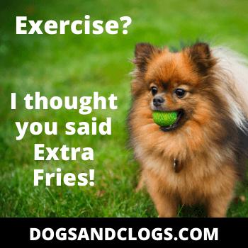 Pomeranian Exercise
