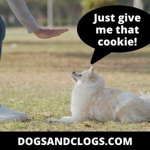 Train Your Pomeranian Not To Bark