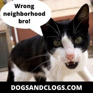 Aggressive Cat
