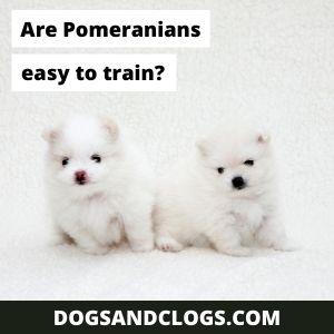 Are Pomeranians Easy To Train?