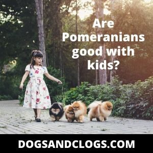 Are Pomeranians good with kids