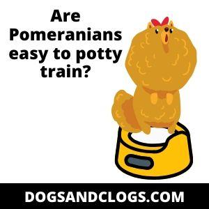 Are Pomeranians easy to potty train?