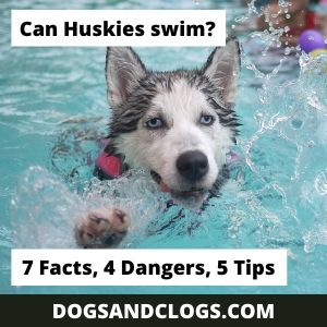 Can Huskies Swim