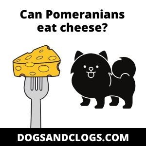 Can Pomeranians Eat Cheese?