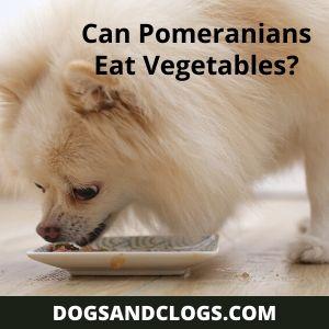 Can Pomeranians Eat Vegetables