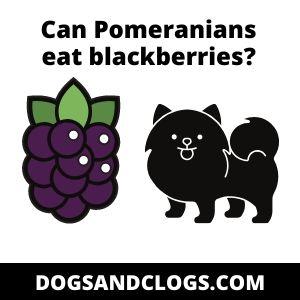 Can Pomeranians eat blackberries?