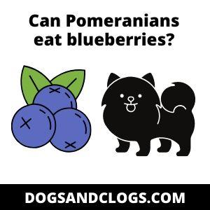 Can Pomeranians eat blueberries?