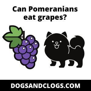 Can Pomeranians eat grapes or raisins?