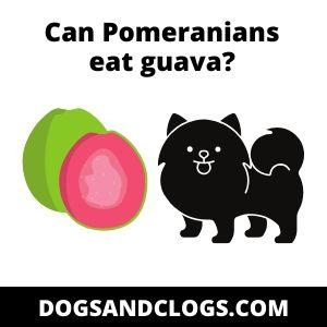 Can Pomeranians eat guava?