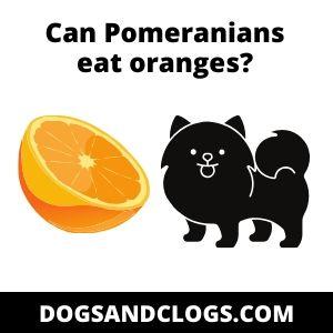 Can Pomeranians eat oranges?