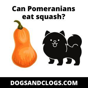 Can Pomeranians eat squash?