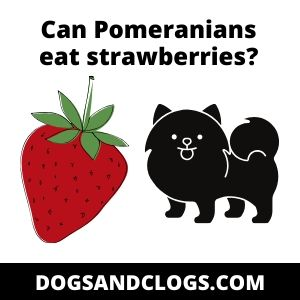 Can Pomeranians eat strawberries?