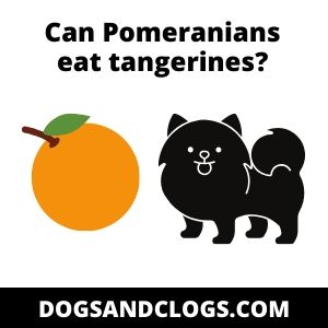 Can Pomeranians eat tangerines?