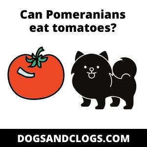 Can Pomeranians eat tomatoes?