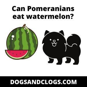 Can Pomeranians eat watermelon?