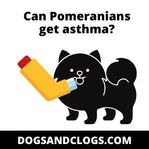 Can Pomeranians get asthma
