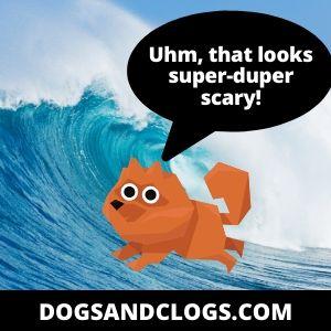 Dangerous Places For Your Pomeranian To Swim