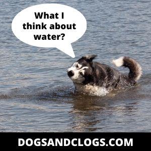 Do Huskies Like Water