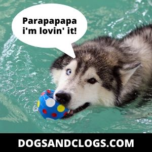 Do Huskies Loves Water