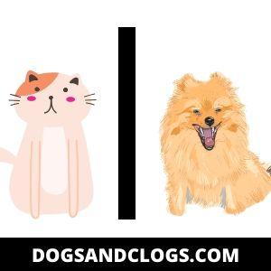 Do Pomeranians And Cats Get Along