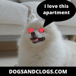 Do Pomeranians Make Good Apartment Pets