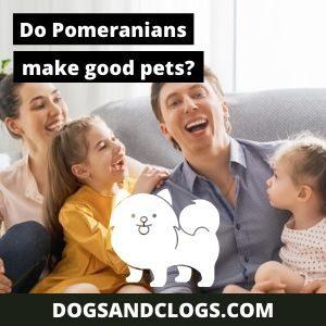 Do Pomeranians Make Good Pets
