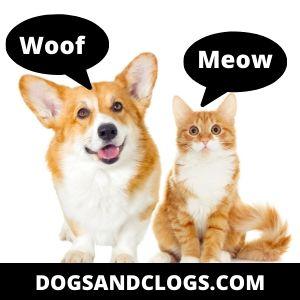 Cat vs. dog communication