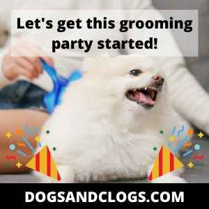 Grooming equipment for your Pomeranian