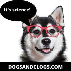 How Do Huskies And Pomeranians Breed