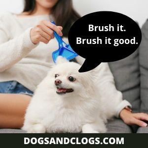 How to brush your Pom