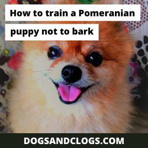 How to train a Pomeranian puppy not to bark