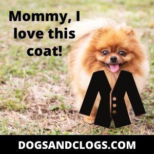 Pomeranian Coat