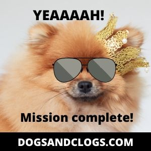 Pomeranian Mission Complete