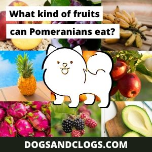Can Pomeranians Eat Fruit? And if so, what kind of fruits can Pomeranians eat?