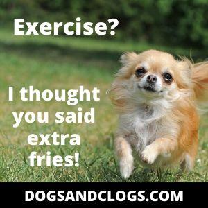 Dog Meme Exercise