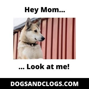 Dog Meme Looking For Attention