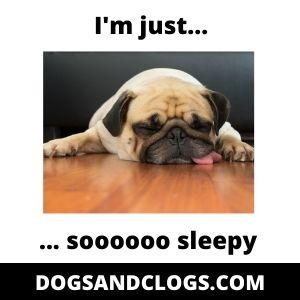 Sleepy Dog Meme