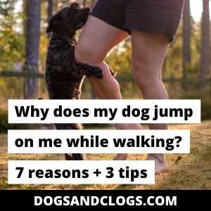 Why Does My Dog Jump On Me While Walking