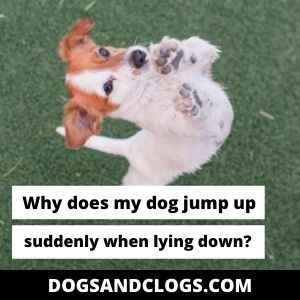 Why Does My Dog Jump Up Suddenly When Lying Down?
