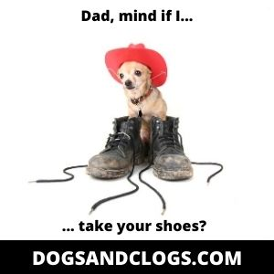 Chihuahua Boots Meme