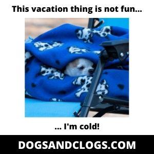 Chihuahua Feeling Cold Meme