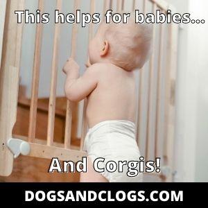 Corgi Climbing Stairs