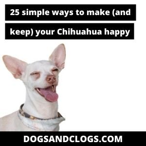 How To Make My Chihuahua Happy