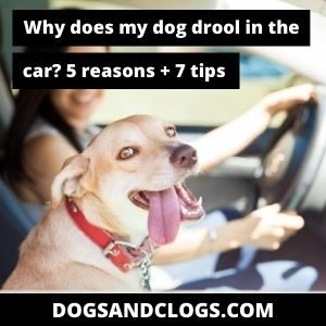 Why Does My Dog Drool In The Car?