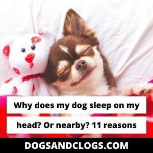 Why Does My Dog Sleep On My Head? Or Nearby?