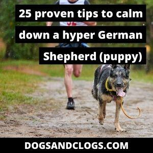 Calm Down A German Shepherd Puppy