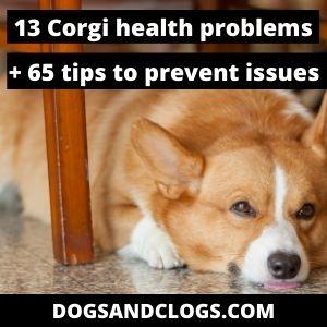 Corgi Health Problems