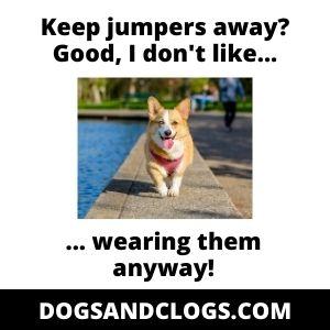 Corgi Keep Jumpers Away Meme