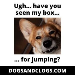Corgi Remove Jumping Objects Meme